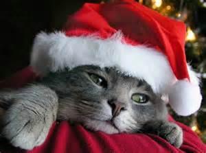 クリスマスだから夢を語る!